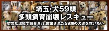 Banner350100