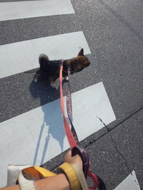 横断歩道ちっこ!