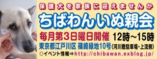 Chibawan_teiki_inuoyakai320x120