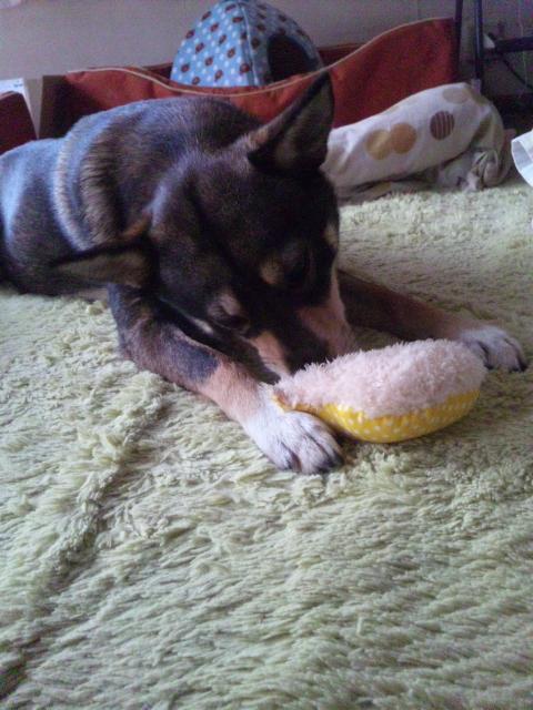 ネコのおもちゃ&<br />  犬のおもちゃ